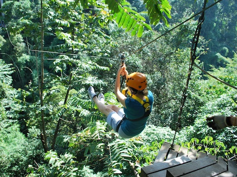 Flight of the Gibbon chiangmai 3