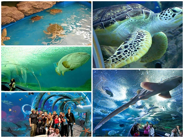 Underwater World Pattaya 3