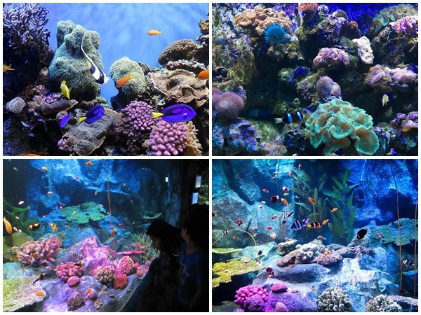 Underwater World Pattaya 5