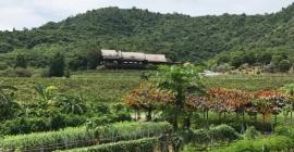 Vườn nho Hua Hin Hills - chốn thảo nguyên xinh...