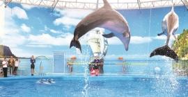 Khu giải trí Pattaya Dolphinarium đầy tuyệt vời tại Chonburi,...